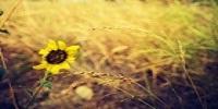自留地在长草,得消灭一点点。